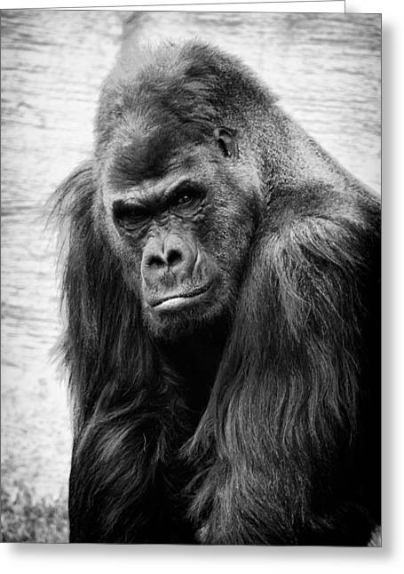 Scowling Gorilla Greeting Card