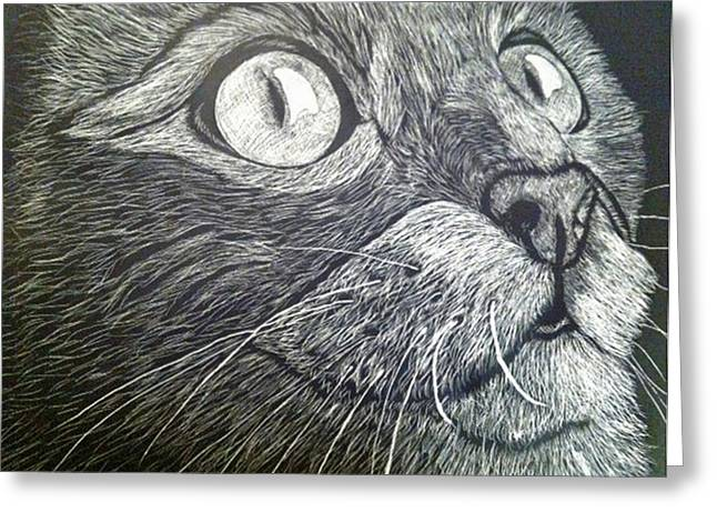 Scratch Art Kitty Cat Greeting Card