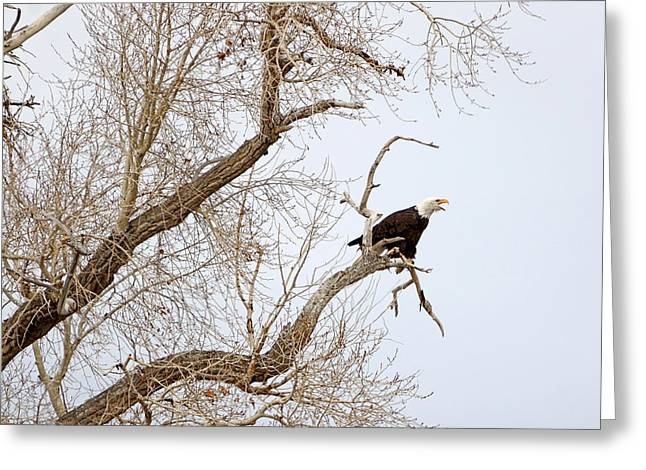 Screamin' Eagle Greeting Card by Eric Nielsen
