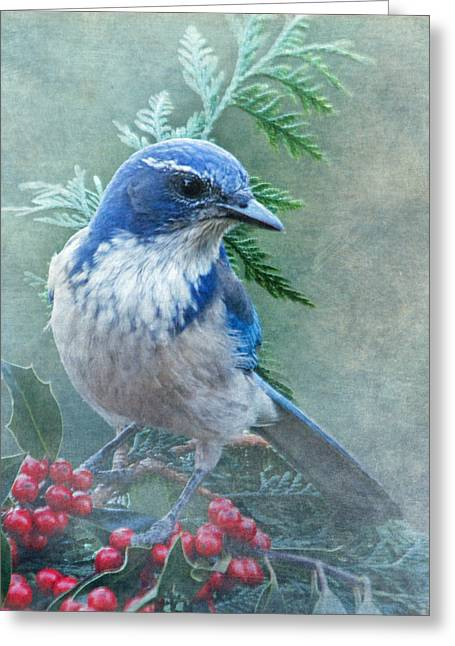 Scrub Jay Christmas Greeting Card by Angie Vogel