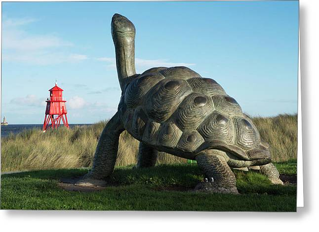 Sculpture Of A Turtle And The Herd Greeting Card by John Short