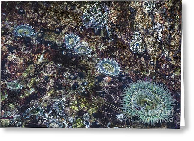 Sea Anenome Jewels Greeting Card by Terry Rowe