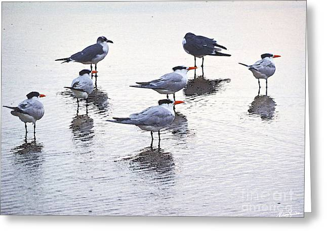 Greeting Card featuring the photograph Sea Birds No.2 by Melissa Sherbon