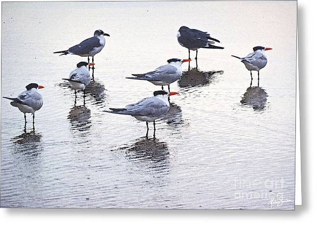 Sea Birds No.2 Greeting Card