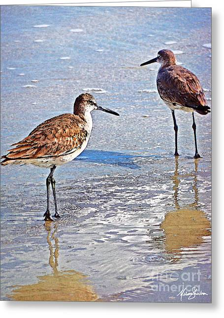 Sea Birds No.4 Greeting Card