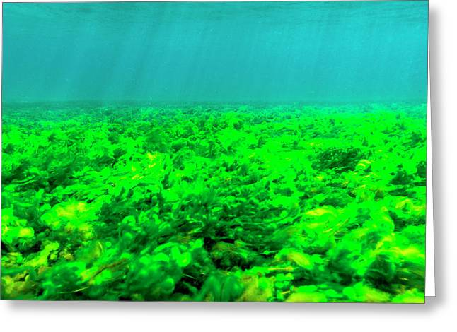 Sea Bottom Covered With Green Algae, St Greeting Card