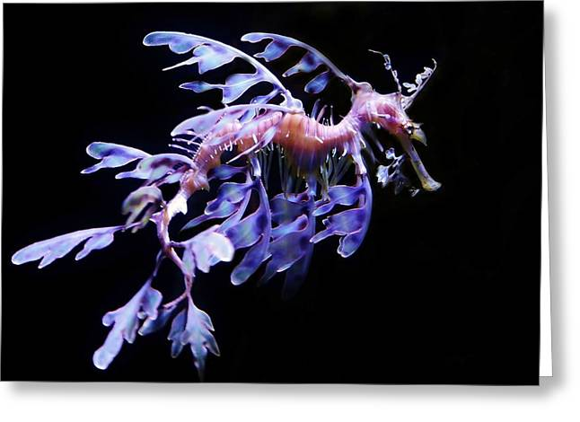 Sea Dragon Greeting Card by Paulette Thomas