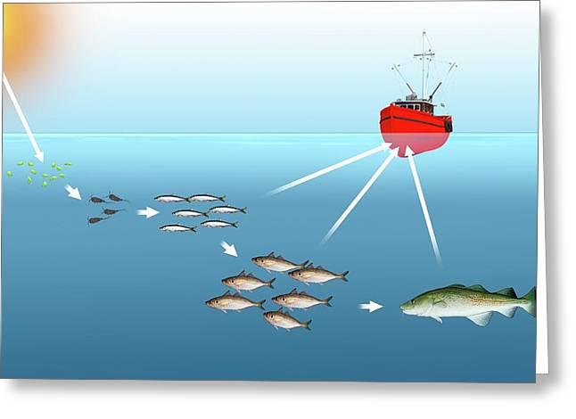 Sea Food Chain Greeting Card by Mikkel Juul Jensen