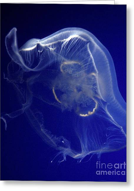 Sea Ghost Greeting Card by Paul W Faust -  Impressions of Light