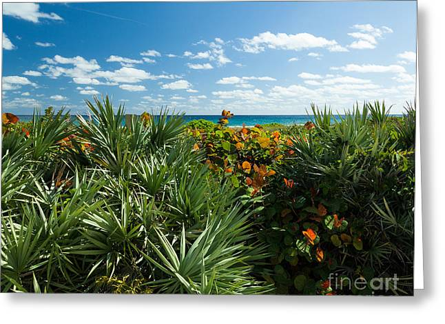 Sea Grapes And Saw Palmetto Greeting Card