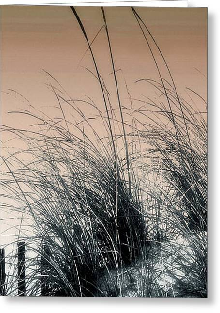 Sea Grass 4 Greeting Card by H Scott Cushing
