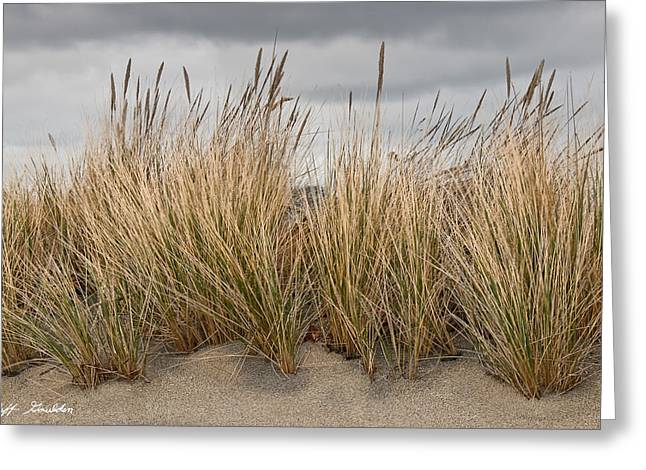 Sea Grass And Sand Greeting Card