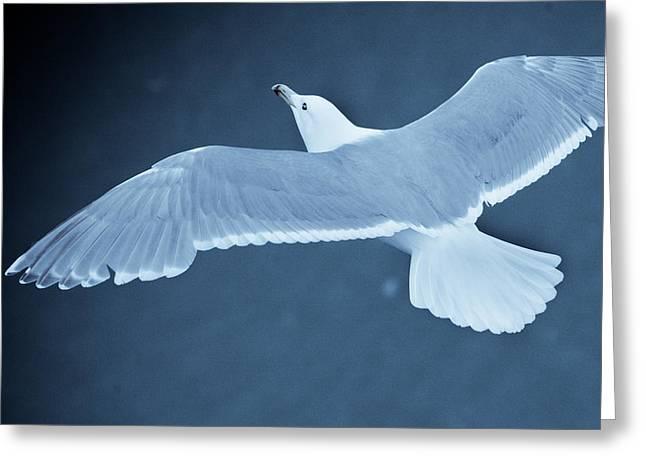 Sea Gull Over Icy Water Greeting Card