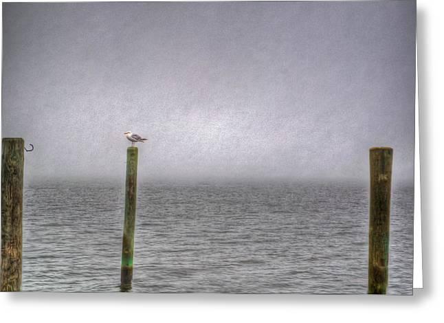 Sea Gull Greeting Card by Ryan Crane