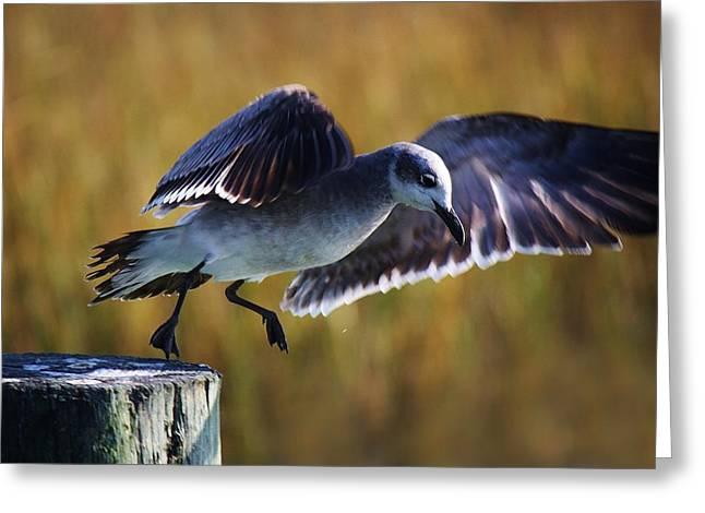 Sea Gull Take Off Greeting Card by Paulette Thomas