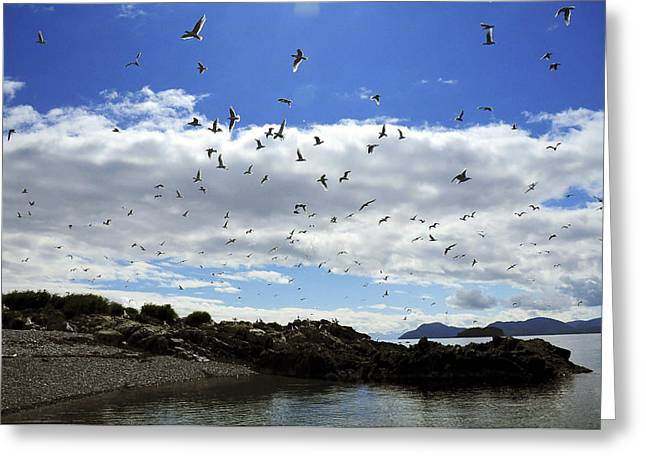 Sea Gulls Flying Above The Shoreline Of Greeting Card