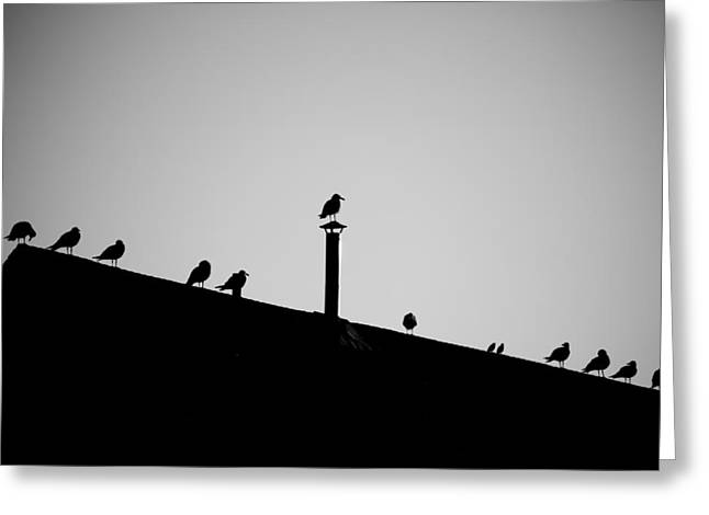 Sea Gulls In Silhouette Greeting Card