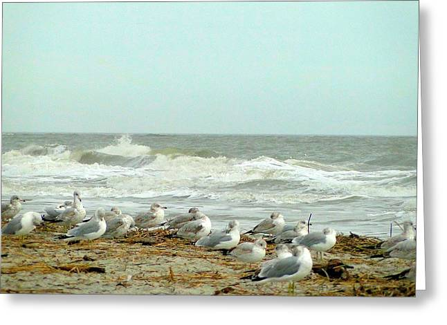 Sea Gulls In Windy Surf Greeting Card by Cindy Croal