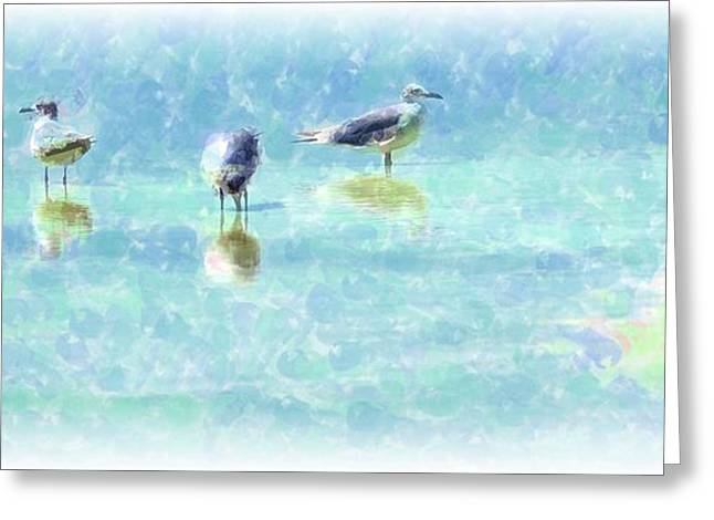 Sea Gulls Greeting Card by Kathleen Struckle