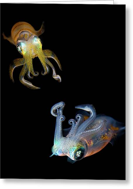 Sea Jewels Greeting Card by Andrey Narchuk
