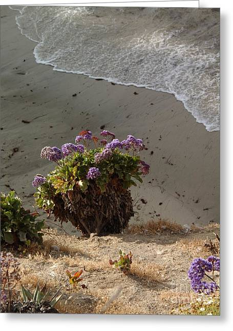 Sea Lavender And Surf - California Greeting Card by Anna Lisa Yoder