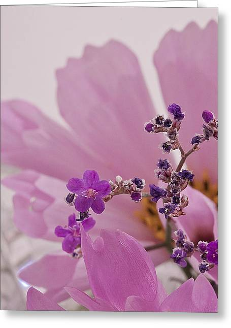 Greeting Card featuring the photograph Sea Lavender Macro  by Sandra Foster