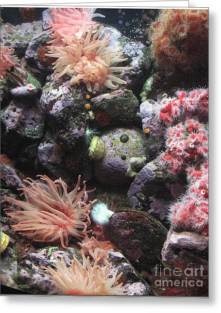 Greeting Card featuring the photograph Sea Life by Chris Anderson