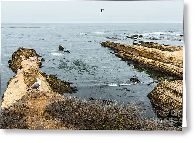 Sea Life Cliffs Greeting Card by Jamie Pham