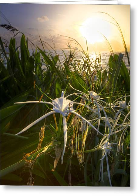 Sea Lily Greeting Card by Debra and Dave Vanderlaan