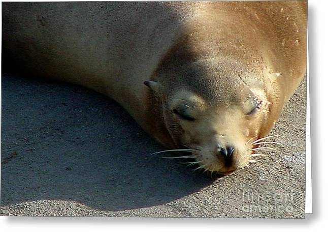 Sea Lion-00178 Greeting Card by Gary Gingrich Galleries