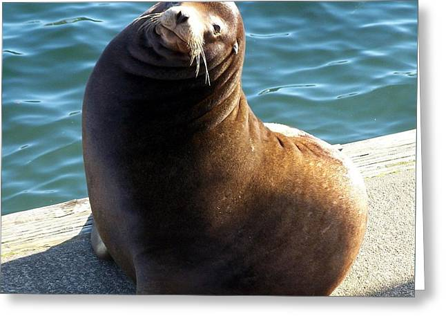 Greeting Card featuring the photograph Sea Lion Basking In The Sun by Chalet Roome-Rigdon