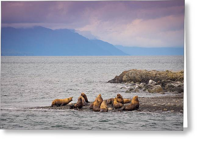 Greeting Card featuring the photograph Sea Lion Bulls by Janis Knight