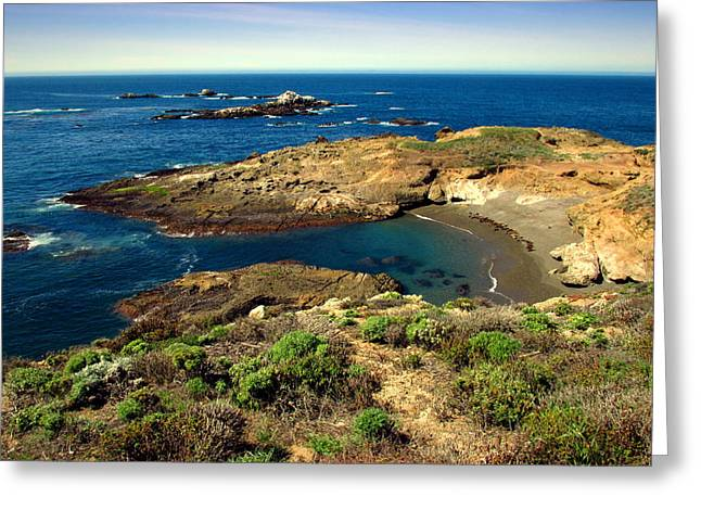 Sea Lion Cove At Point Lobos Greeting Card by Joyce Dickens