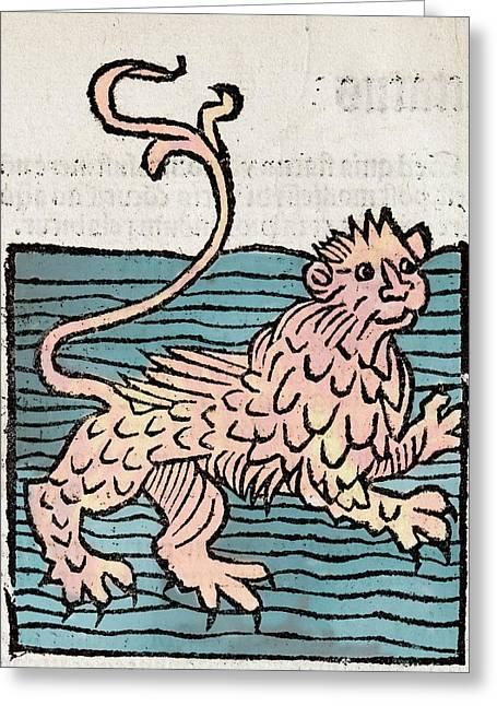 Sea Lion Greeting Card by Paul D Stewart