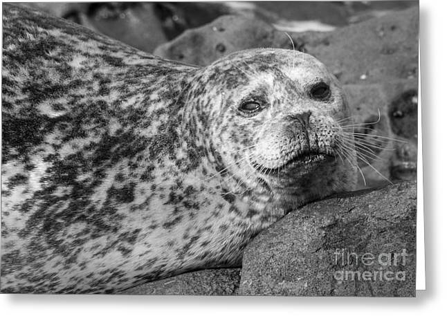 Sea Lion Stare In Monochrome Greeting Card by Darleen Stry