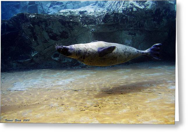 Greeting Card featuring the photograph Sea Lion Swimming Upsidedown by Verana Stark