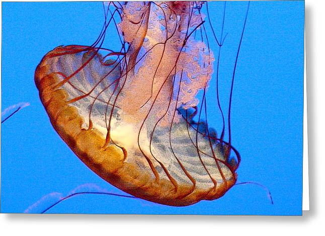 Sea Nettle Greeting Card by Art Block Collections
