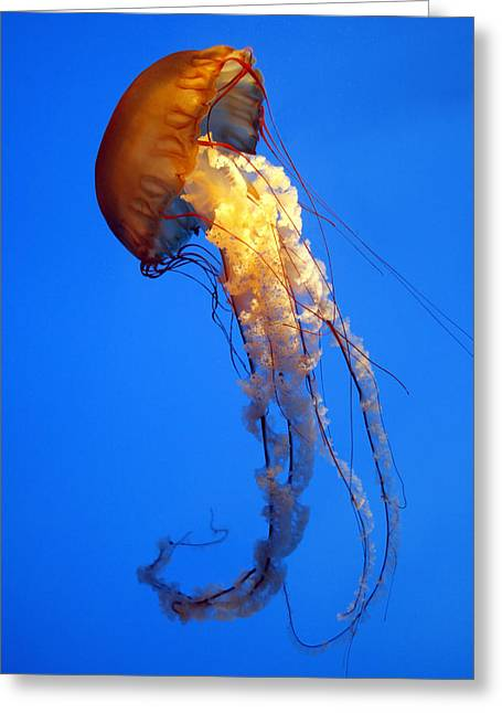 Sea Nettle Greeting Card by David Simons