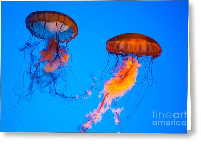 Sea Nettles Greeting Card