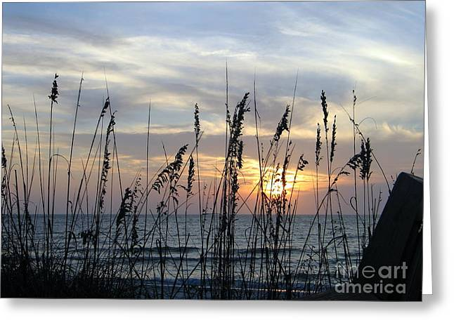 Greeting Card featuring the photograph Sea Oak Sunset by Shelia Kempf