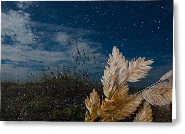 Sea Oat Beach Greeting Card by Randy Sylvia