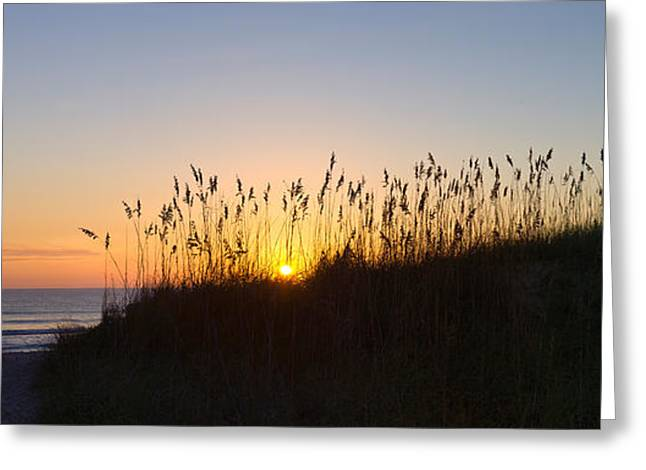 Sea Oat Grass On The Coast, Florida, Usa Greeting Card