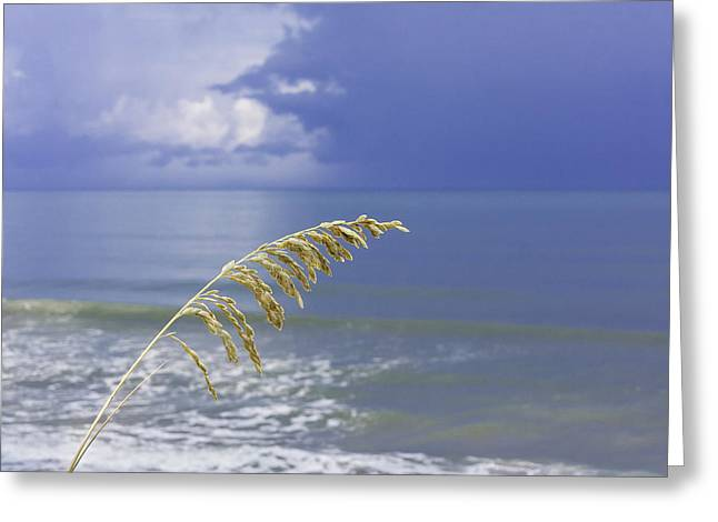 Sea Oats Ahead Of The Storm Greeting Card