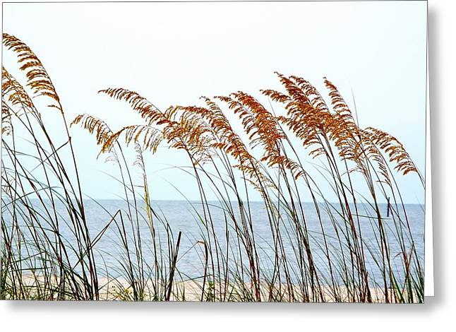 Sea Oats And Serenity Greeting Card by Cindy Croal