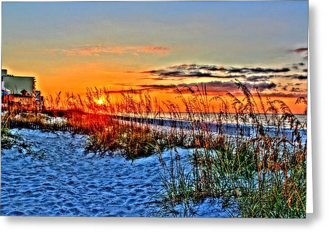 Sea Oats At Sunrise Greeting Card