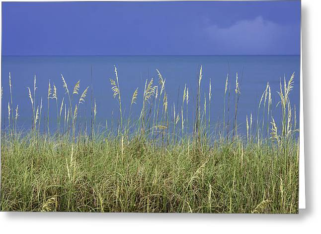 Sea Oats By The Blue Ocean And Sky Greeting Card by Karen Stephenson