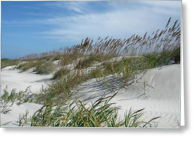 Greeting Card featuring the photograph Sea Oats by Ellen Tully