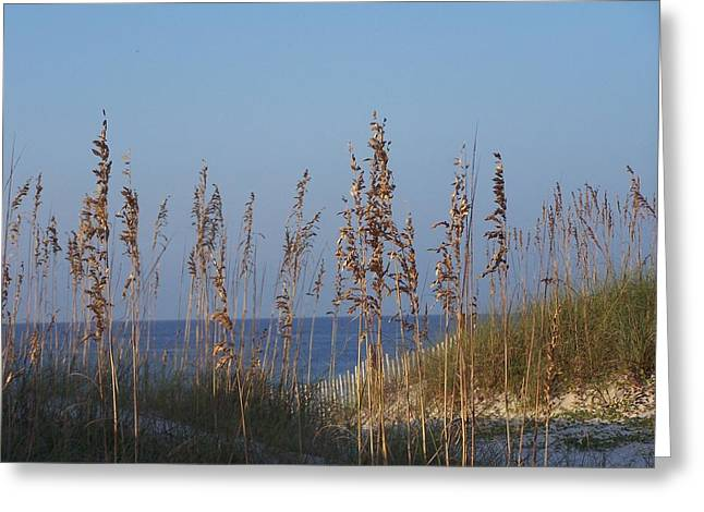 Greeting Card featuring the photograph Sea Oats by Michele Kaiser