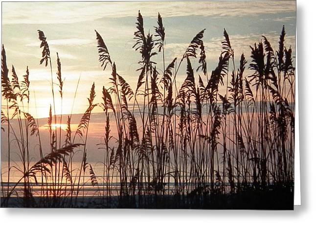 Fabulous Blue Sea Oats Sunrise Greeting Card