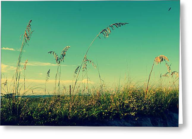 Sea Oats Under The Morning Sun In Sarasota Greeting Card